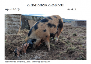 A pig standing in the dirt