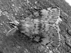 A close up of a moth