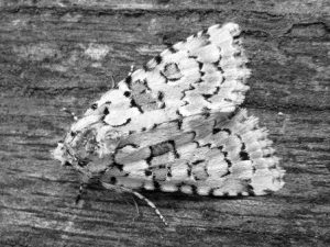 Close up of a moth