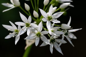 A white flower on a plant