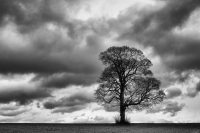 Tree with clouds in the sky